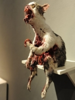 Taxidermy Gone Crazy 07