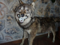 Taxidermy Gone Crazy 08
