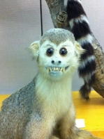 Taxidermy Gone Crazy 12