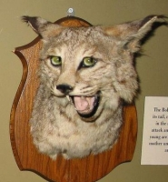 Taxidermy Gone Crazy 13