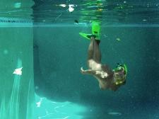 Underwater 31