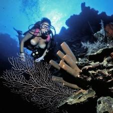 Underwater 17