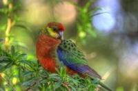 Western Australia By Orsm 24