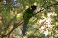 Western Australia By Orsm 27