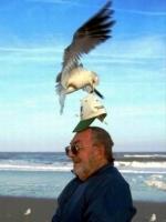 When_birds_attack_01