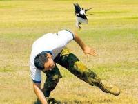 When_birds_attack_06