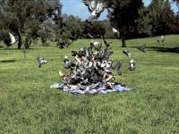 When_birds_attack_10