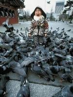 When_birds_attack_15
