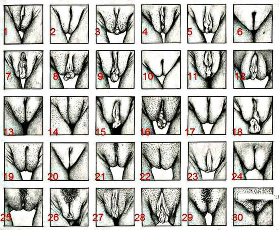 Виды женских лобков с