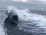 Boaties Treated To A Whale Surfing Their Wake