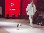 Cat Walk On The Catwalk