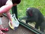 Chimps Fucking Love Mountain Dew