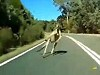 Cyclist Encounters A Kangaroo And Manages To Keep It Up