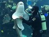 Diver And Shark Have A Special Relationship