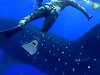 Diver Didn't See A Whale Shark Coming Right At Him