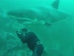Diver Has A Close Call With A Great White Shark