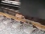Dog On The Tracks Under A Train Is Not Going To End Well