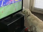 Dogs Brain Can't Process The TV
