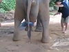 Elephant Births Aint Pretty