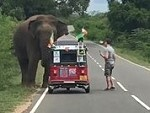 Elephant Doesn't Like Tourists