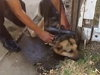 Fire Fighters Rescue A Shepherd From An Unusual Predicament