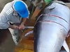 Fisherman Gets Busy Slicing Up Their Giant Tuna