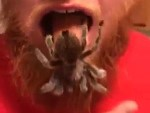 Ginger Stores Spiders In His Mouth