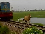 Hey Horse Get Off The Fucking Train Tracks