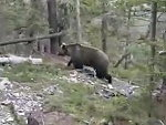 Hikers Encounter A Grizzly Bear And Bricks Are Shat