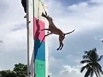 How High Can A Dog Jump
