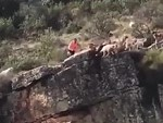 Hunting Dogs Fall Off A Cliff Bringing Down A Deer