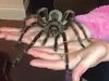 Just Playing With The Pet Spider