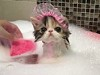 Kitty Taking A Bath Is Disturbingly Adorable