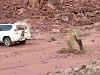 Land Cruiser Unsuccessfully Pulls Out A Tree Stump