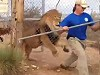 Lion Handler Says Its Important To Never Show Fear