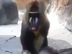 Monkey Makes These Guys Fucking Lose It