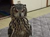 Owl Wants To Know WTF You Are Up To