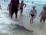 Pet Crocodile Loves Meeting People On The Beach