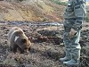 Russian Bears Are Surprisingly Friendly