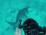Shark Attempts To Chow Down On A Turtle And Diver
