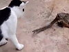 Snake Has To Fight A Cat Whilst Being Eaten By A Frog