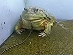 So Toads Are Pretty High Up The Food Chain