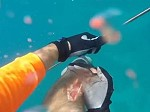 Spearfisherman Attacked By A Hungry Shark Caught On GoPro
