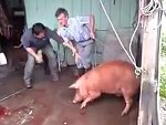 That's Not How To Slaughter A Pig