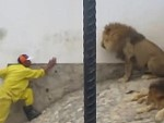 These Lion Handlers Are Clearly Mental